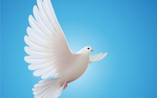 Почему голубь символ мира?
