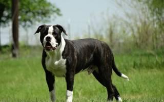 У какой породы собак самый сильный прикус?