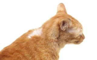 У кота выпадает шерсть на шее