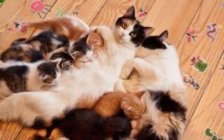 Как отучить котенка от сосания кошки – сосет у кота
