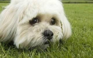 У собаки трясется нижняя челюсть