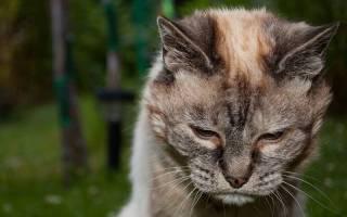Почему коты уходят умирать из дома, признаки смерти у кошек