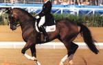 Как ездить галопом на лошади?