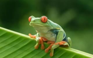 Земноводные кто к ним относится, какие животные относятся к амфибиям?
