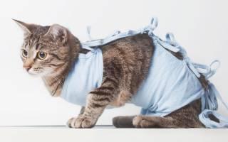 Поведение кота после кастрации в первый день