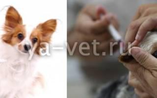 Прививка от бешенства собаке когда делать – как правильно вакцинировать щенка?