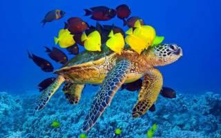 Красноухая черепаха и рыбки в одном аквариуме