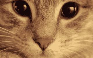 Кровяные выделения у кошки причины