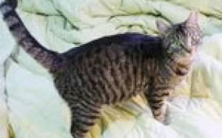 Может ли беременная кошка просить кота?
