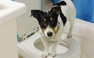 Сколько собака может терпеть в туалет?