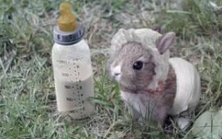 Можно ли кроликам молоко?