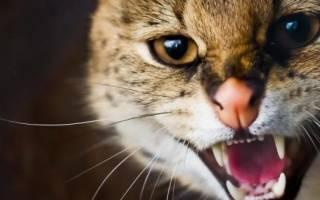 Кот баюн инструкция по применению для котов