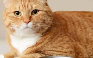 Как отучить кошку от сухого корма?