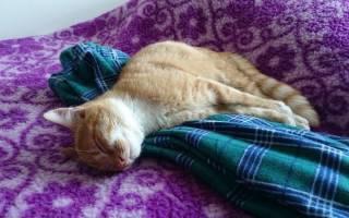 Почему кошки спят на вещах хозяина – почему коты ложатся на вещи?