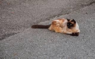 У кота разъезжаются задние лапы причины