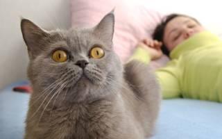 Как отучить кота орать по утрам?