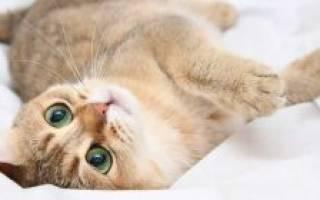 Таблетки для кота чтобы не просил кошку, капли для кошек