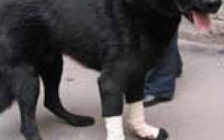 Болезни опорно двигательного аппарата у собак