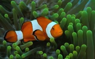 Как спят рыбки в аквариуме?