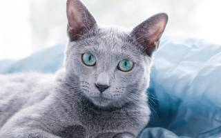 Кот худеет но ест хорошо – почему кошка похудела?