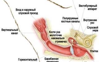 У кота из уха течет коричневая жидкость