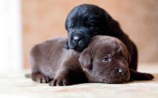 Как определить пол собаки?