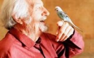 Когда попугаи начинают говорить?