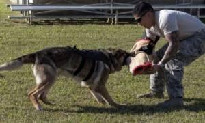 У какой породы собак самый сильный укус?