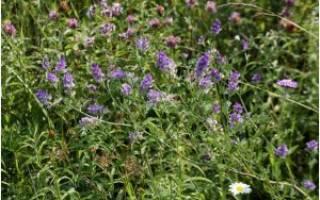 Какую траву можно давать курам несушкам