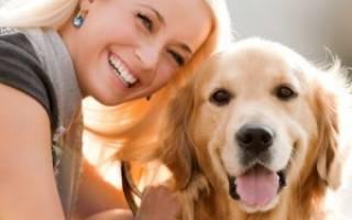 Какая порода собак самая умная и преданная?