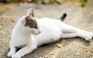 Может ли кошка родить одного котенка, кот рожает