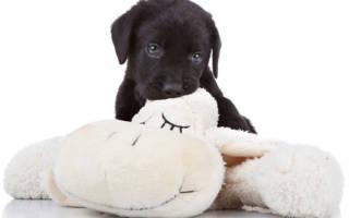 Если щенок кусается как его отучить, как научить щенка не кусаться?