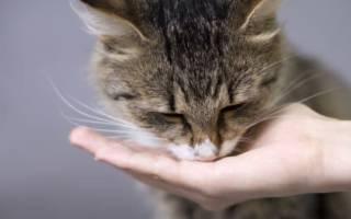 Чем кормить кота чтобы он потолстел, как раскормить кошку?