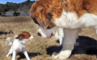 До какого времени растут собаки?