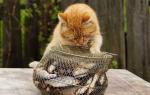 Можно ли кормить кастрированного кота рыбой – корм для стерилизованной кошки