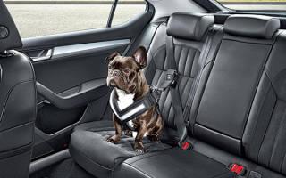 Как защитить салон автомобиля от собаки?
