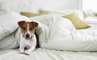 Как отучить собаку от кровати?