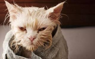 Как приучить кота мыться в ванной?