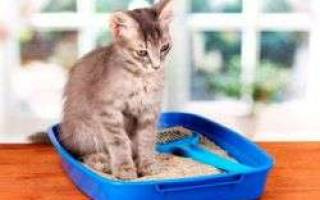 Запор у кошек лечение в домашних условиях – глицериновые свечи собаке