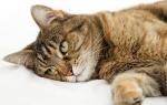 Кошка заваливается на бок при ходьбе причины, кот ходит как пьяный что делать