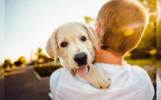 Чем защитить щенка на прогулке?