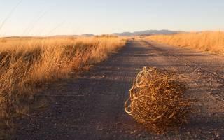Сколько молока дает овца в сутки, доят ли овец?