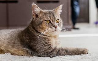 Что будет если кастрировать кота?