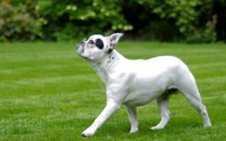 Как наказывать щенка за непослушание правильно?