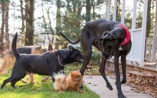Сколько известно пород собак?