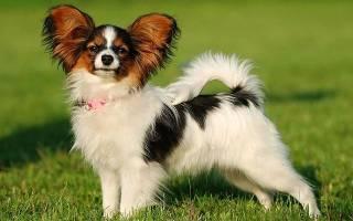 Какая самая красивая порода собак?