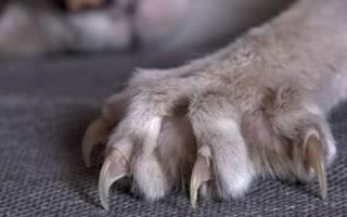 Как подстричь ногти щенку?