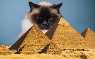 Культ кошек в Древнем Египте