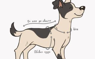Как узнать размер шлейки для собаки?