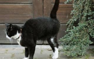 Как коты метят территорию?